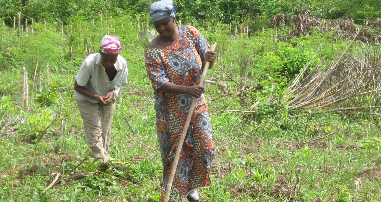 Cropped the obaatanpa women group planting monringa seeds1